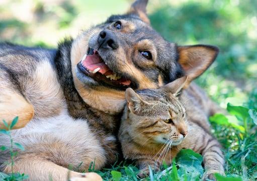 Pet Tracker Blog Image